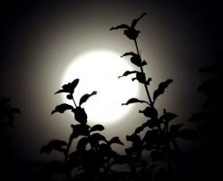 10/25は満月。相場変動に注意だけど、空を見よう。秋の月は美しい。その理由は?
