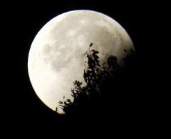 ナルティック(狂気)のラテン語の月(ルナ)が語源。「満月」は市場の狂気=相場変化にご注意を