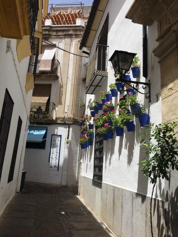 白壁が続く花の小道